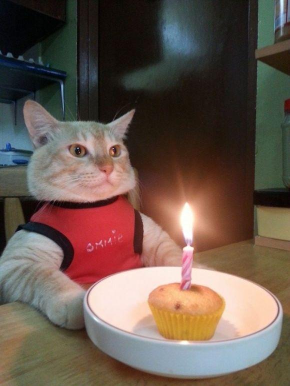 «2 ans, c'est long dans la vie d'un chat»